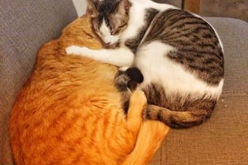 snuggly cats at Medellin cat cafe!